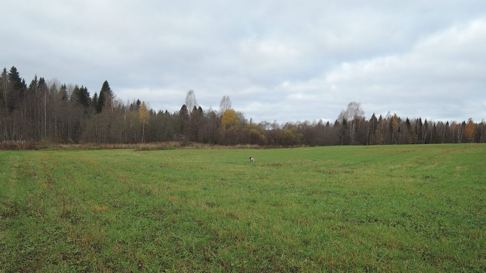 Осенняя охота с легавой в Вологодской области