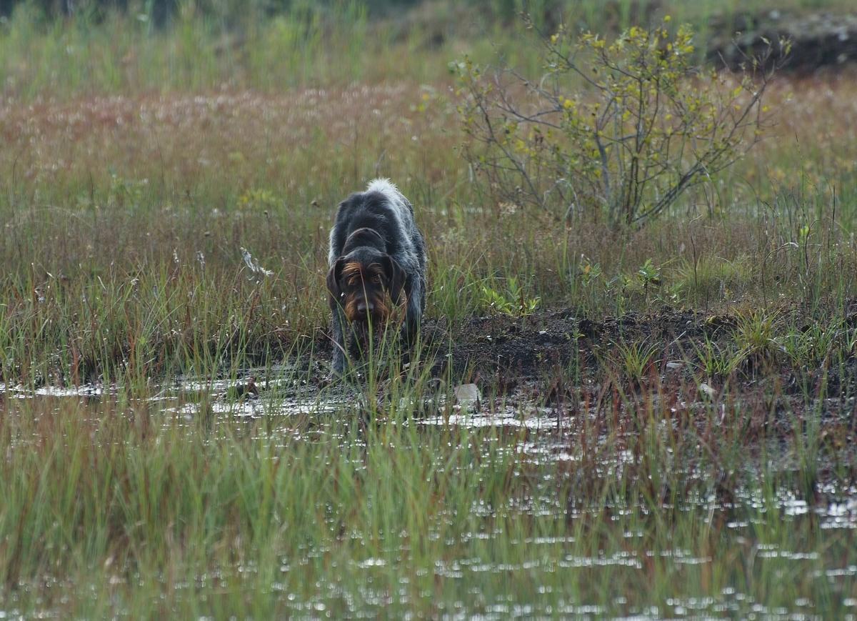 Работа дратхара на болоте.