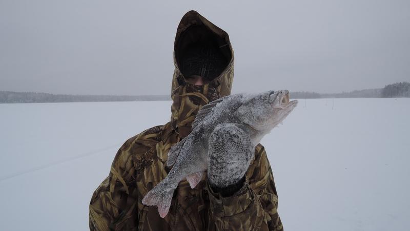 Рыбалка в Вологодской области - ловля окуня