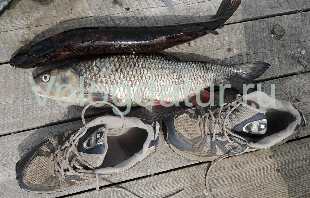 Новые правила рыболовства - правильный метод измерения рыбы.