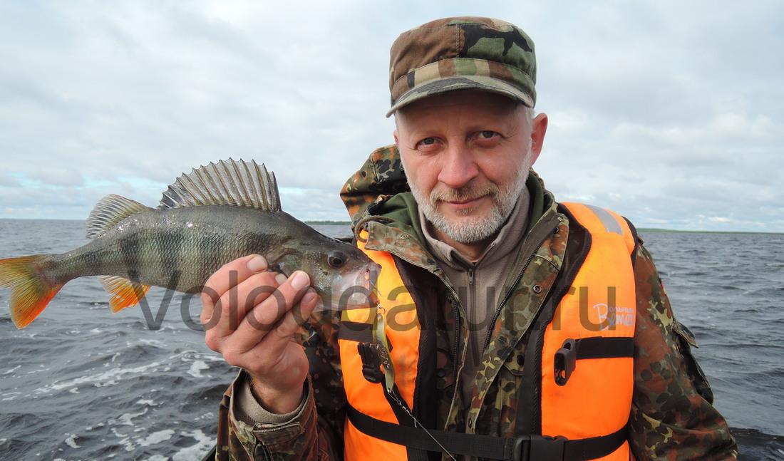 Ловля окуня на озере Белое Вологодской области