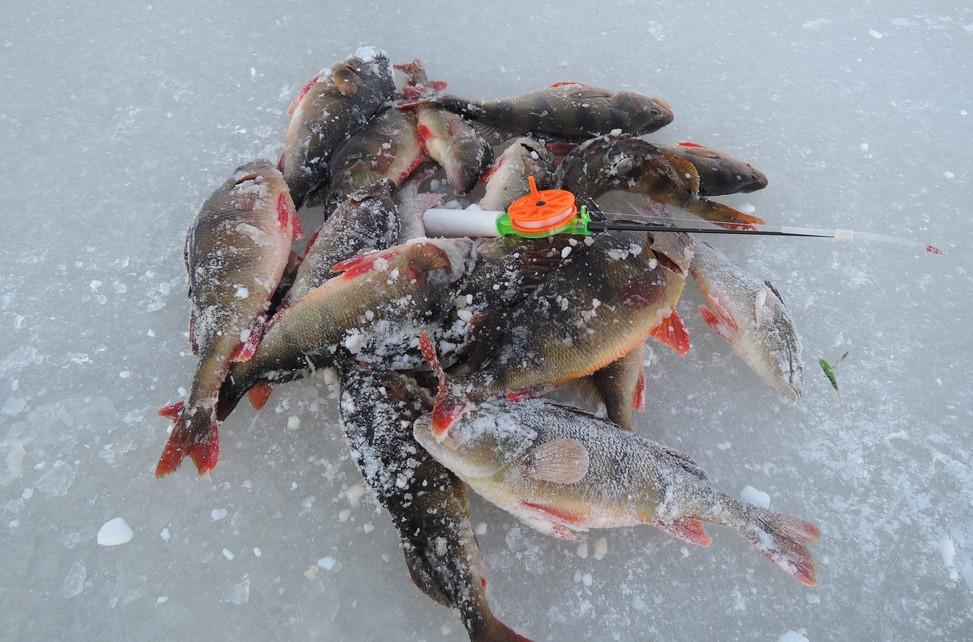 Клюет ли рыба на озере